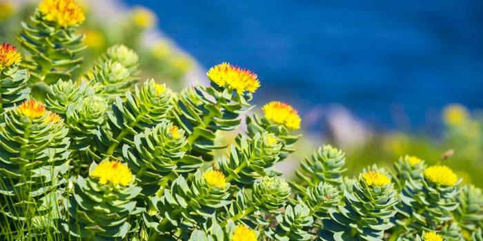 Santé et bien-être mental : quelles sont les plantes les plus efficaces